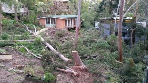 barons cres tree loss