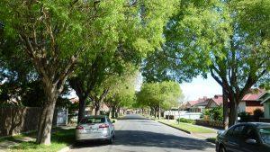 suburban-tree-canopy-annie-charlton
